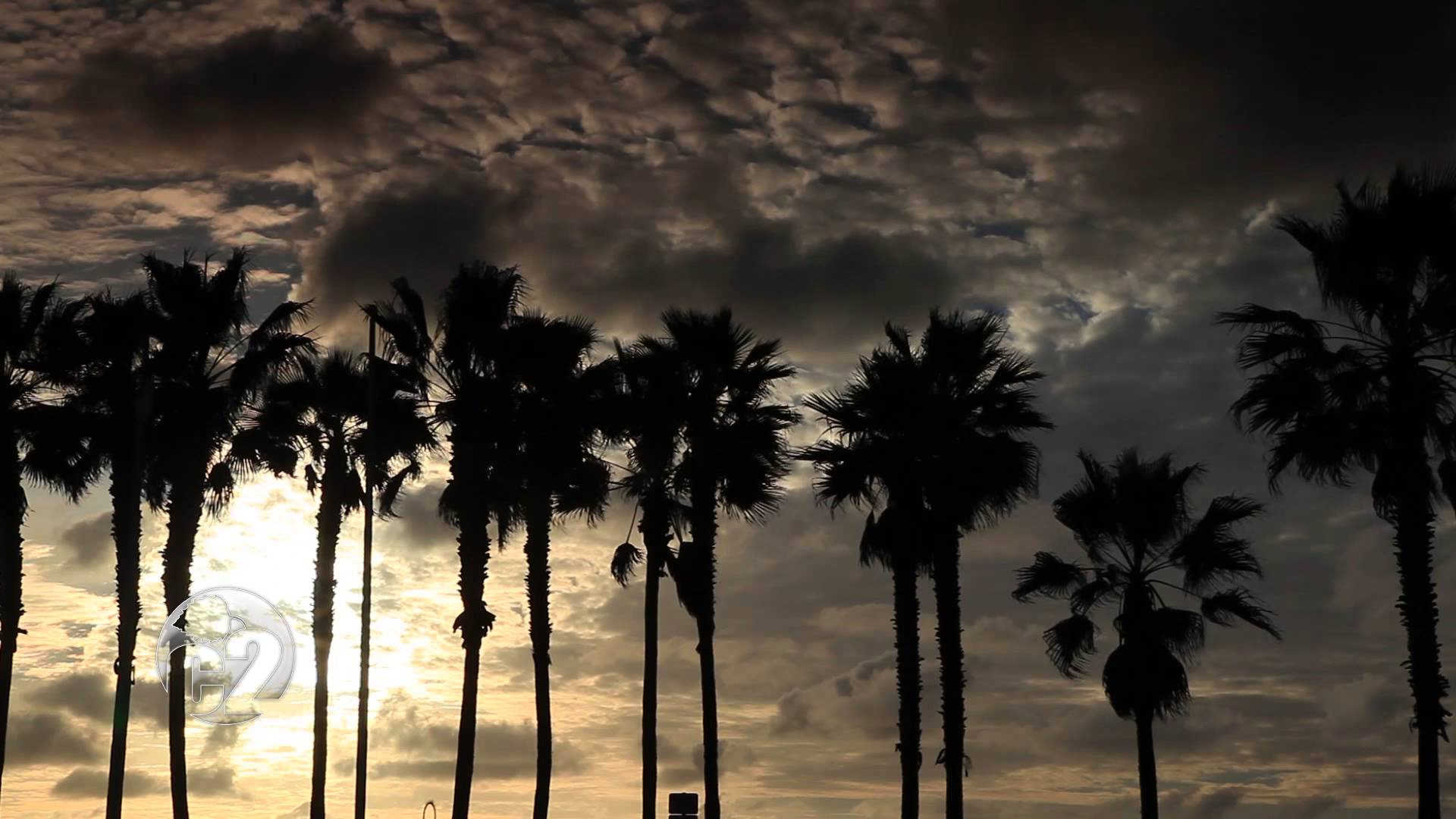 California-Imperial-Beach-Silhouetted-Trees-at-Sunset